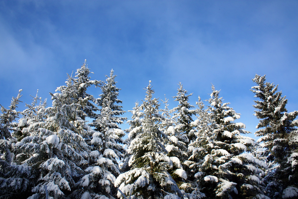 http://www.pachd.com/free-images/nature-images/winter-01.jpg