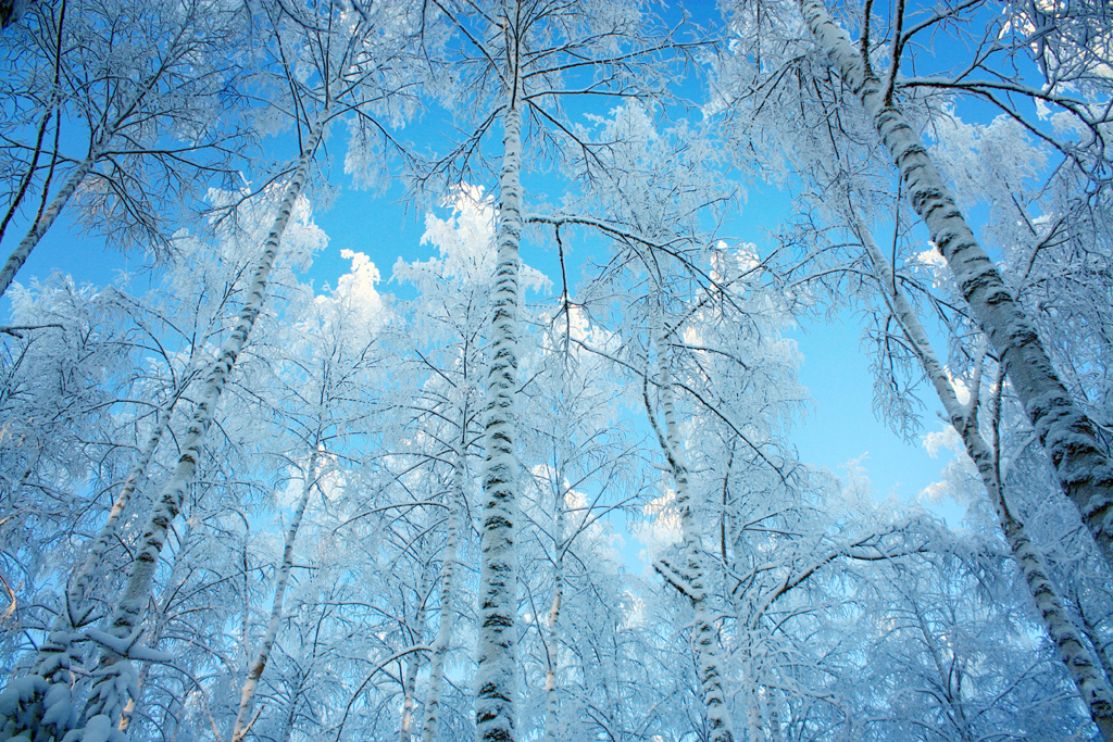 Free Winter Pictures, Images And Stock Photos